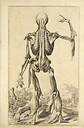 "Male full body back woodcut print at the opening of the Human Anatomy book ""Notomie di Titiano"" Printed in Italy in 1670"