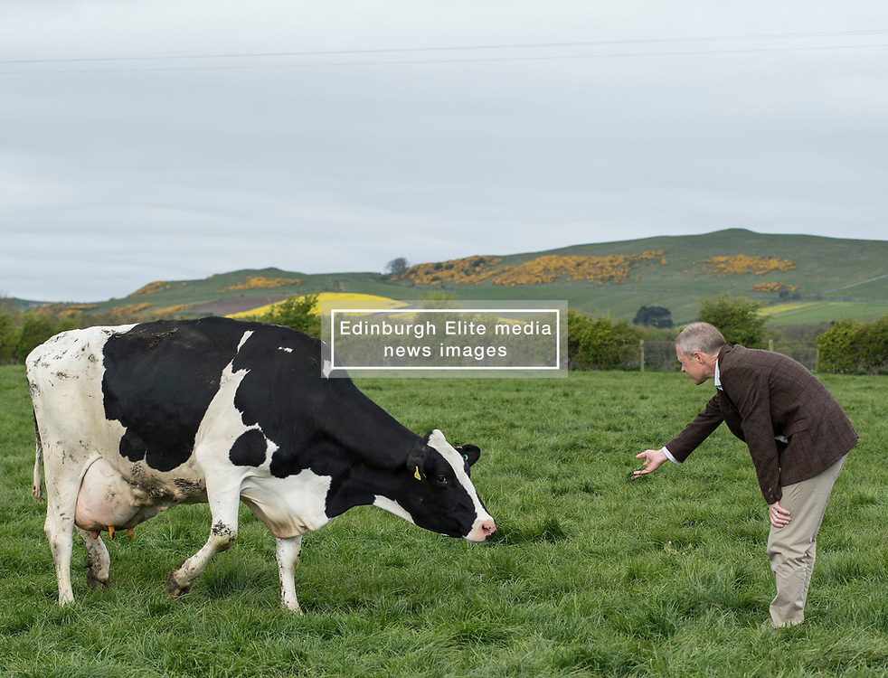 Scottish Lib Dem leader Willie Rennie gets to grips with one of the herd of cows used for the cheese when he visited St Andrews Farmhouse Cheese Company in Pitenweem in Fife in the run up to the 2017 General Election.<br /> <br /> © Dave Johnston/ EEm