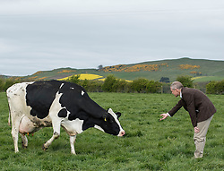 Scottish Lib Dem leader Willie Rennie gets to grips with one of the herd of cows used for the cheese when he visited St Andrews Farmhouse Cheese Company in Pitenweem in Fife in the run up to the 2017 General Election.<br /> <br /> &copy; Dave Johnston/ EEm