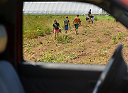 Youth workers tend to a plot of land in Lincoln, MA in the mid-July sun.