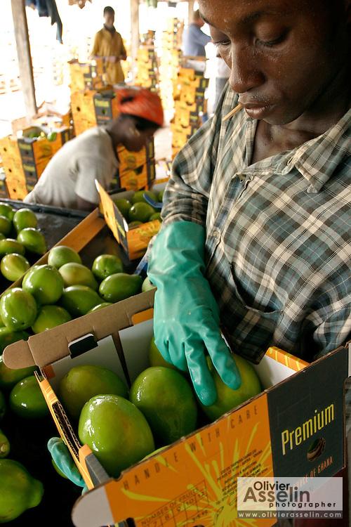 Papaya processing and packing plant at Dansak Farms, Nsawam, Ghana.