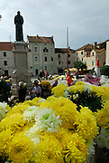 Chrysanthemums for sale for All Saints Day and All Souls Day. Town square, Kacicev trg. Makarska, Croatia