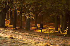 2014-10-28 Runners and dog walkers enjoy the bright sunshine on Hampstead Heath