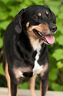 Gracie is posing for her photo at the Chemung County SPCA.