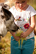 Even the family dog likes organic vegetables! Anna Bell (age 3) feeds freshly harvested corn to Boo, the family pet, at her family's organic farm in Sandy Utah.