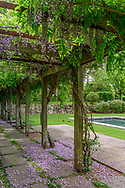 Pergola with Wisteria, Sag Harbor, NY