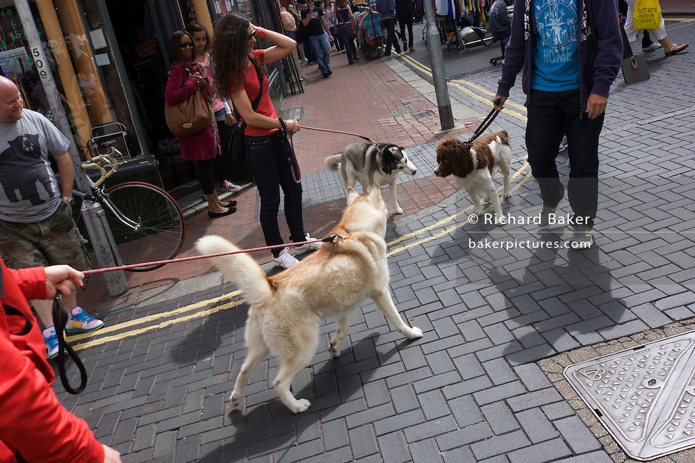 A Springer Spaniel and two other unknown breeds of dog, use their senses of smell on a Brighton street corner.