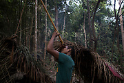 A Maniq man called Ayben checks the straightness of his blow pipe prior to a hunting trip. Often the Maniq men will walk for days, sleeping in the forest, to catch food for their clan.<br /> <br /> Evidence suggests that the Maniq, a Negrito tribe of hunters and gatherers, have inhabited the Malay Peninsula for around 25,000 years. Today a population of approximately 350 maniq remain, marooned on a forest covered mountain range in Southern Thailand. Whilst some have left their traditional life forming small villages, the majority still live the way they have for millennia, moving around the forest following food sources. <br /> <br /> Quiet and reclusive they are little known even in Thailand itself but due to rapid deforestation they are finding it harder to survive on the forest alone and are slowly being forced to move to its peripheries closer to Thai communities.