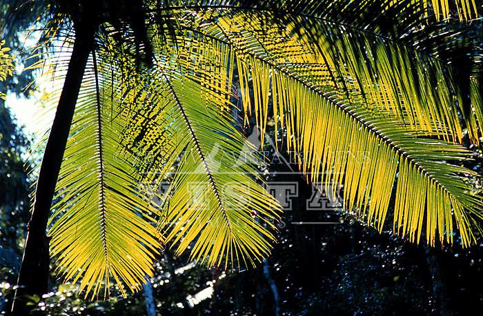 Flora. Foto de Ze Paiva/Vista Imagens