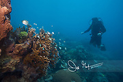A scuba diver explores an underwater reef system at the Anambas archipelago.