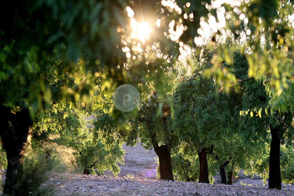 Almendros en el valle del Cidacos. La Rioja ©Daniel Acevedo / PILAR REVILLA