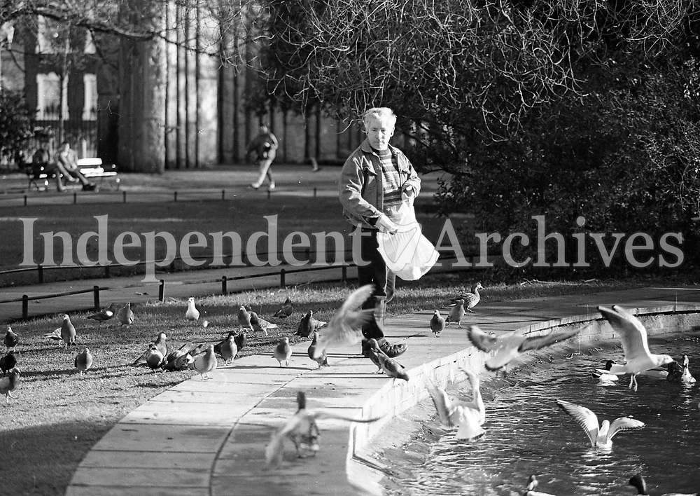 Gerry Scallan, Terenure, Dublin feeding the birds at St Steven's Green, Dublin, circa Feburary 1996 (Part of the Independent Newspapers Ireland/NLI Collection).