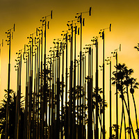 """Public art installation entitled, """"Weather Field No.1,"""" (2013) by Artist Iñigo Manglano-Ovalle at Tongva Park on Wednesday, May 28, 2014. The installation features 49 stainless steel poles each supporting a weather vane and an anemometer, alternating heights of 19, 20 and 21 feet."""