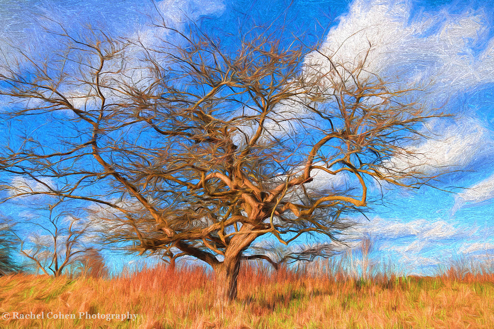 &quot;Spring Tree Painting&quot;<br />