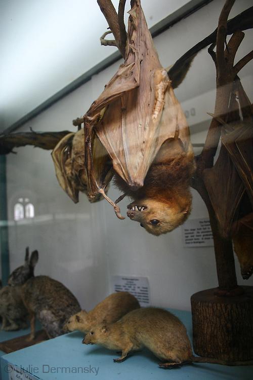 Natural History Museum & Mauritius Institute