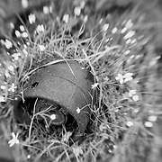 Nature Reclaims A Rusted Artifact - Pottsville - Merlin, Oregon - Lensbaby - Black & White