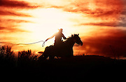 Cowboy Cracking Stock Whip at Sunset