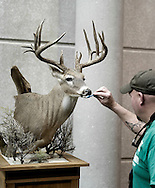 Jeff Edmondson from McDonough, Georgia, prepare a white tailed deer with a toothbrush