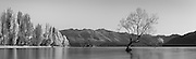 Panoramic (2.52m x 0.77m) of the Lone Willow Tree in Lake Wanaka, New Zealand.<br />