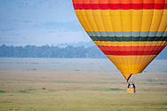 A hot air balloon in the middle of landing in Maasai Mara National Reserve, Kenya