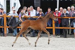 037 - Fyloma<br /> KWPN Paardendagen Ermelo 2010<br /> © Dirk Caremans