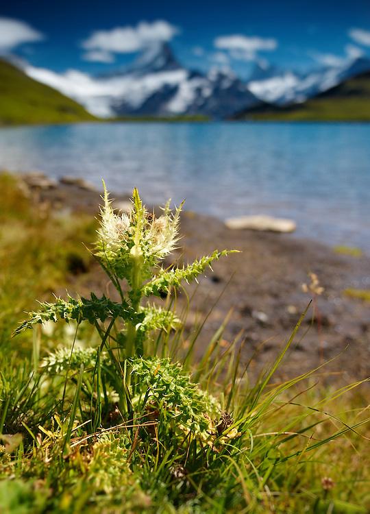Switzerland - Bachalp lake view