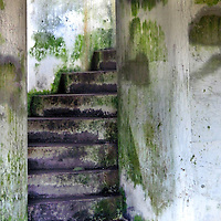 A mossy damp stairway