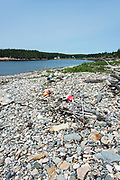 Lobster buoys washed up on Harvey's Beach, Eastern Point, Isle au Haut, Maine, USA.