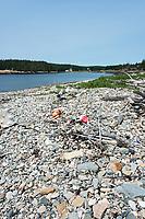Lobster buoys washed up on Harvey's Beach, Eastern Point, Isle au Haut, Maine, USA.