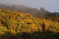 The Monteverde Cloud Forest Reserve extends across the mountains that separate the Pacific and Caribbean slopes of Costa Rica. Winds carry warm and humid air from the Caribbean lowlands up to the reserve, where it cools and forms an almost permanent cloud layer over the forest. The sky does clear periodically, though, and one of the most beautiful views of the Monteverde Cloud Forest Reserve is when the clouds part at sunset and golden light illuminates the canopy.<br />