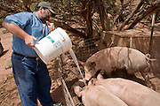 July 26, 2008 -- SNOWFLAKE, AZ: DAVID HEININGER feeds whey to pigs on the Black Mesa Ranch, a 280 acre spread in the high desert near Snowflake, AZ. The ranch keeps the pigs to dispose of the whey. The pigs are later sold for slaughter. The ranch owners, David and Kathryn Heininger, run a herd of about 40 Nubian dairy goats and hand make artisan cheese from the goat's milk. It's a second gear for them, they retired from Tucson, AZ, where they bought and renovated  historic homes. The moved to the ranch in 2001 and started making and selling cheese shortly after the move. Their cheese is used in expensive restaurants in Phoenix and sold at natural food stores in Arizona.   PHOTO BY JACK KURTZ