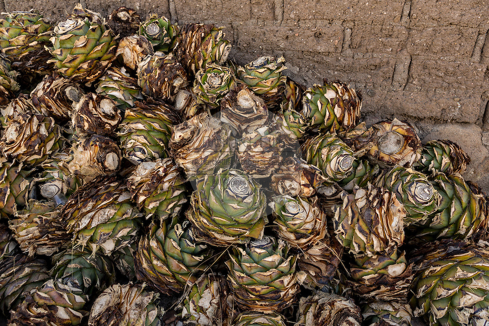 A pile of freshly cut blue agave hearts at an artisanal Mezcal distillery November 5, 2014 in Matatlan, Mexico. Making Mezcal involves roasting the blue agave hearts, crushing it and then fermenting the liquid.