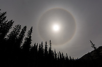 This halo formed around the sun while we were hiking the Nigel Pass trail near the Columbia Icefields on the Icefields Parkway in Banff National Park.<br /> <br /> &copy;2015, Sean Phillips<br /> http://www.RiverwoodPhotography.com