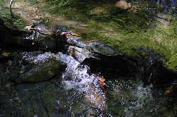 Stream and Rocks at Five Rivers, Albany, New York