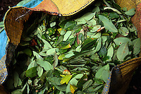A bag a freshly picked coca leaves in a remote area of the southern Colombian state of Nariño, on Monday, June 25, 2007. Although government efforts to eradicate coca have reached many parts of Colombia, still the coca business thrives. (Photo/Scott Dalton)