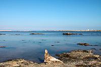 24/04/2009 Brindisi Diga di Punta Riso sullo sfondo il  porto esterno di Brindisi, in primo piano un pezzo di legno a forma di piccione sugli scogli