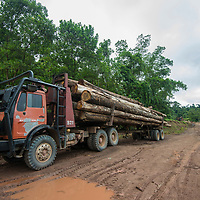 Logs mounted on the back of a lorry, Imbak Canyon Conservation Area, Sabah, Malaysia, Borneo, South East Asia.