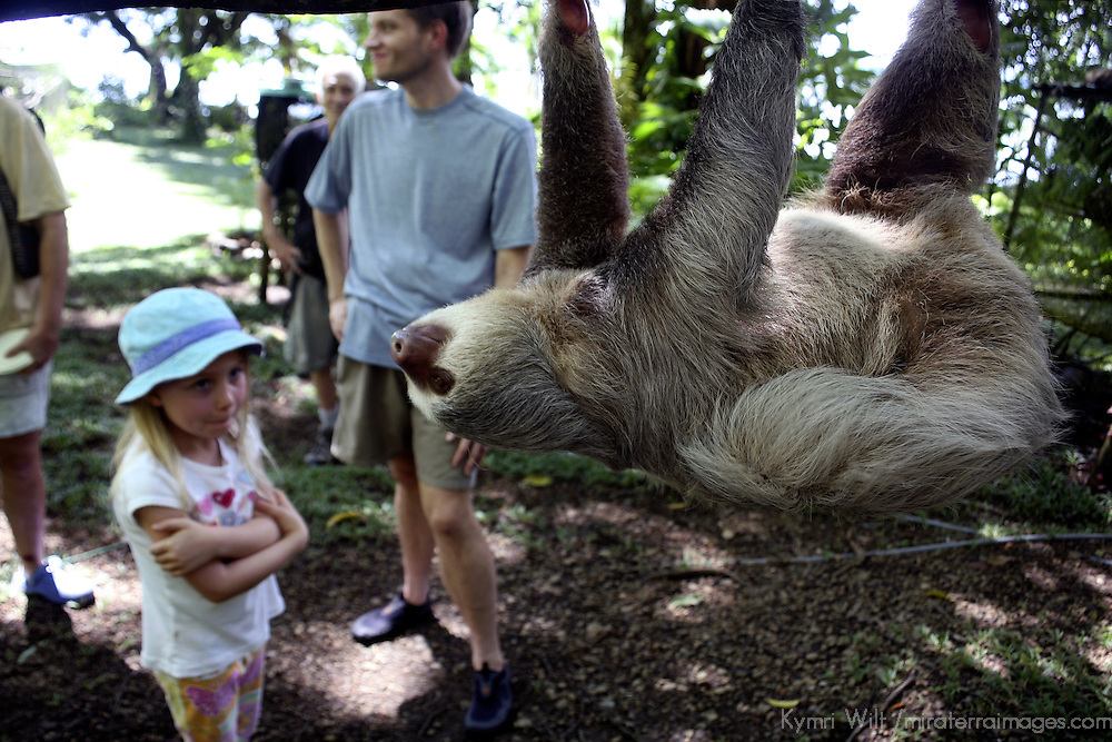 Central America, Latin America, Costa Rica, Golfo Dulce, Cana Blanca Wildlife Sanctuary. Hoffman's Two-Toed Sloth (Chloepus Hoffmani) observed by young girl.