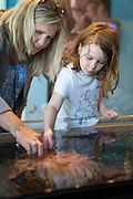The Alaska SeaLife Center, aquarium and marine mammal rehabilitation facility, Resurrection Bay, Seward, Alaska, USA<br /> <br /> Photographer: Christina Sjogren<br /> <br /> Copyright 2018, All Rights Reserved