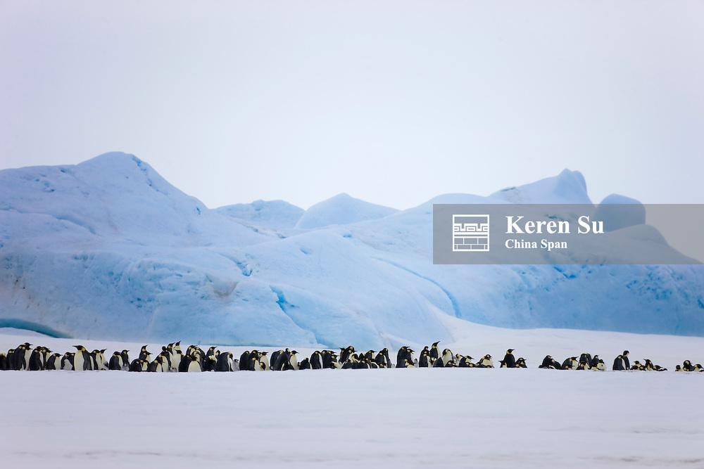 Emperor Penguin rookery, Snow Hill Island, Antarctica