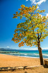 """Autumn Tree at Kings Beach 1"" - Photograph of a tree with fall colored leaves along the shore of Kings Beach, Lake Tahoe."
