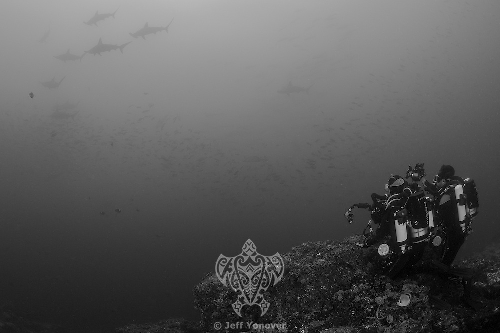 "Scalloped Hammerhead Sharks schooling near the top of a submerged seamount, in order to be ""cleaned"" by Angelfishes and Barberfishes.  Two divers using rebreathers observe and try to capture the scene.<br /> <br /> <br /> Shot at Cocos Island, Costa Rica"