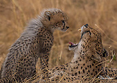 Maasi Mara in Africa
