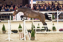094, Cas van 't Gebergte<br /> Hengstenkeuring BWP - Lier 2019<br /> © Hippo Foto - Dirk Caremans<br /> 18/01/2019