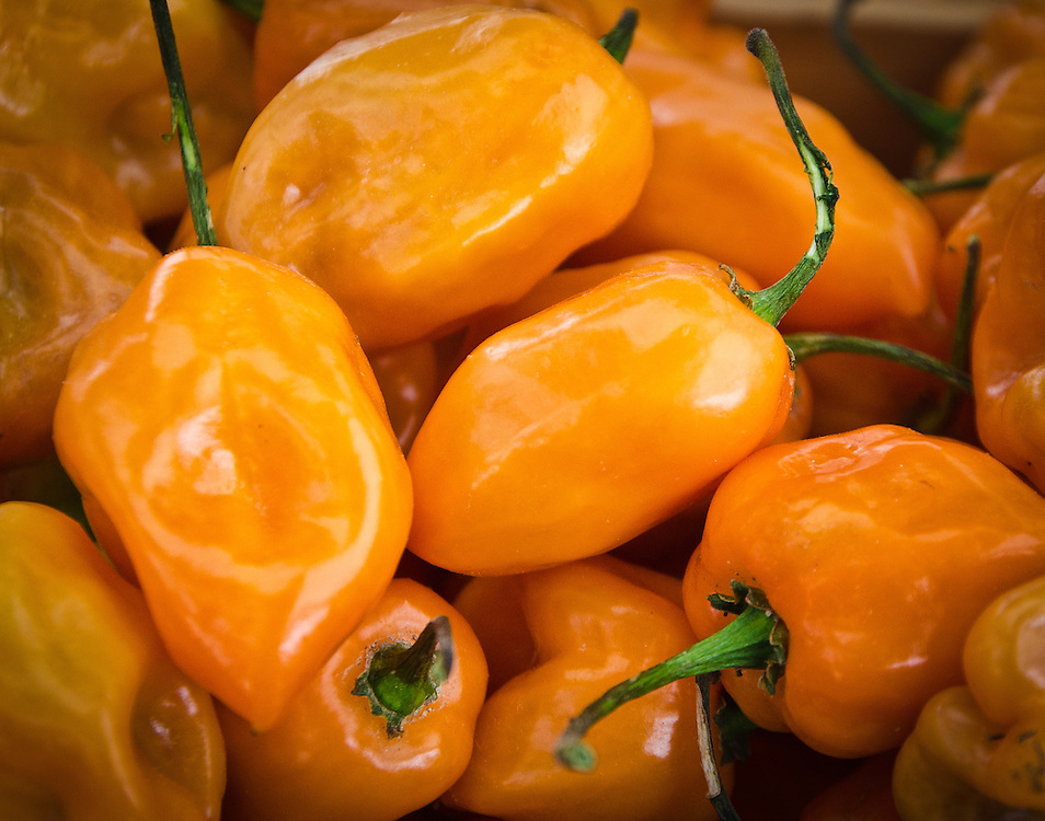 Extremely hot Scotch Bonnet peppers, widely used to flavor hot sauces, for sale at the Boulder, CO Farmers Market