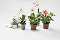 Four potted plants and watering can on floor