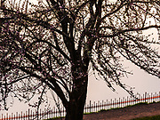 Backlit tree at Reservoir 5, Mount Tabor Park, Portland, Oregon USA.  Nikon AF Micro-Nikkor 200mm f/4D.