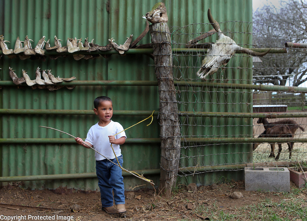 "Xanda Ho'opai, 4, the son of fourth generation cowboy, Jesse Ho'opai, plays with a stick and rope outside his home on Parker Ranch in Waimea, Hawaii. Behind him are the jawbones from wild pigs Xanda's father and cowboy friends have killed over the years.  Many of the cowboy families supplement their income by hunting and fishing.  ""Growing up, we survived off the pork,"" says Shane Ho'opai, Jesse's brother.  ""When my dad worked for Parker Ranch, he didn't bring home that much,"" he explains.  Xanda is growing up in the same cowboy house his father and uncle were raised in on Parker Ranch."