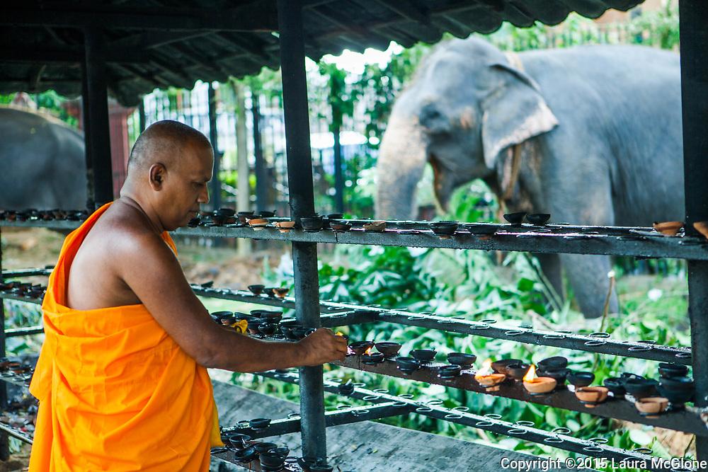 Monk Lighting candles with Elephant in background, Kandy Esala Perahera Festival, Sri Lanka