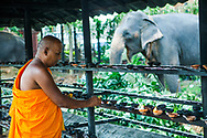 Monk Lighting candles with Elephant in background, Kandy Esala Perahera Festival, Sri Lanka